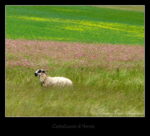 P1420569-001   by lo.tangelini
