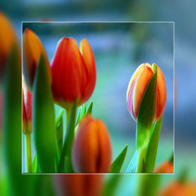 Blütentraum.....