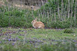 Rabbit (Golden Form) | by markhows