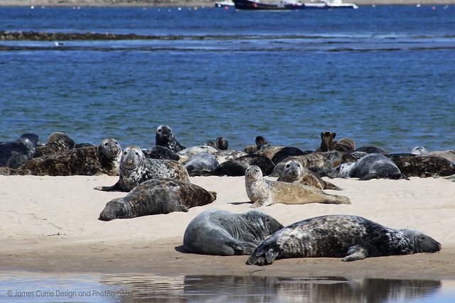 Seals (Explore)