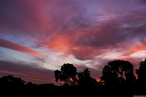 sunset silhouette canon sunsets australia southaustralia gawler canonphotography sunsetphotography canoneos450d sunsetaday violetashessunset corpril