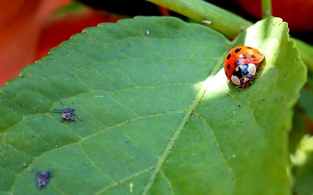 Ladybird Lunch