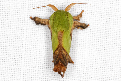 nature insects moths insectmacro mothnight newjerseymoths