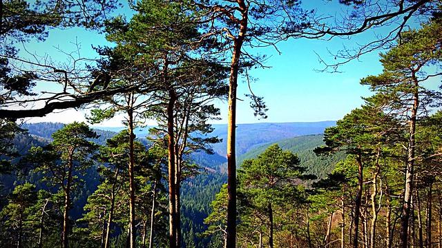 Blick in den Pfälzerwald