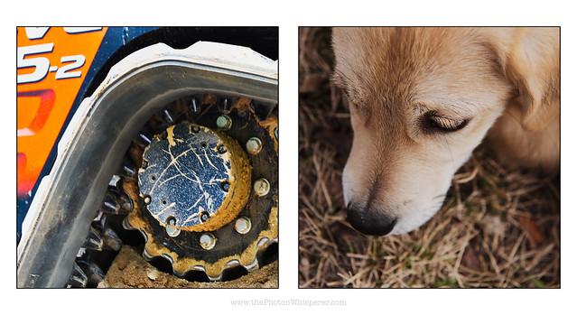 puppy digger