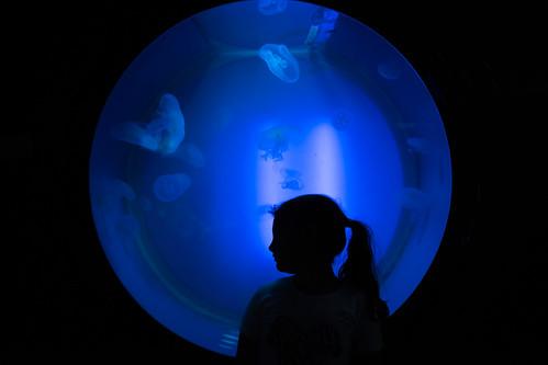 En el circulo de las medusas