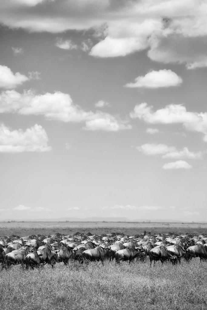 The Great Migration - Tanzania