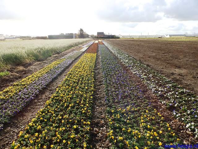09-11-2013          Beverwijk      23.5 Km  (24)