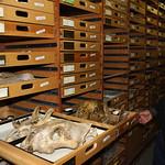 Thu, 11/21/2013 - 4:30pm - vertebrate paleontology