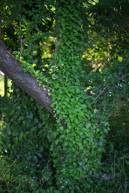 green morning #1