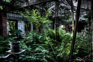 Holdings Country Pottery - Overgrown | by DugieUK
