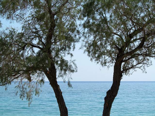 Pines and sea