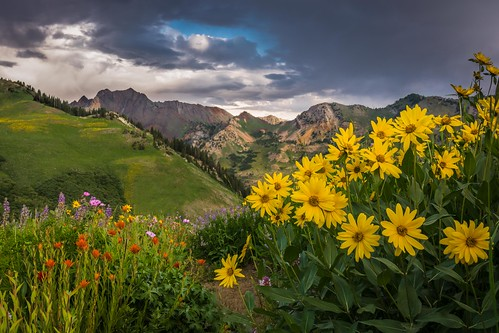 morning red mountain yellow sunrise landscape utah purple cloudy alta wildflowers snowbird littlecottonwood albionbasin d7100