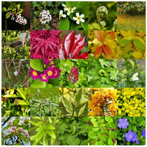 colour color panasoniclumixlx100 wildlifecafe spring garden