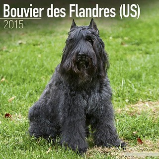 Bouvier-Des-Flandres-US-2015-Wall-Calendar-Pet-Prints-MegaCalendars-9781782081630-Front | by Sleeping Lady Bouviers
