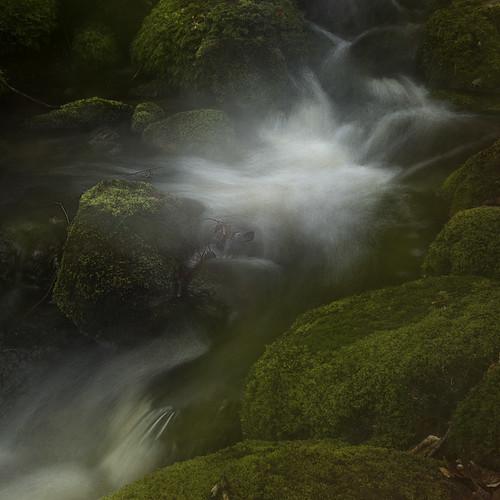 water creek forest flow waterfall moss woods stream sweden stones icm halland