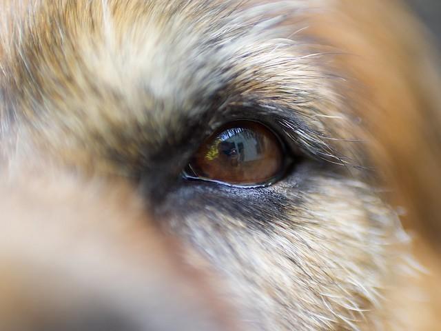 20/52 Weeks of Teddy - Keeping an Eye on You