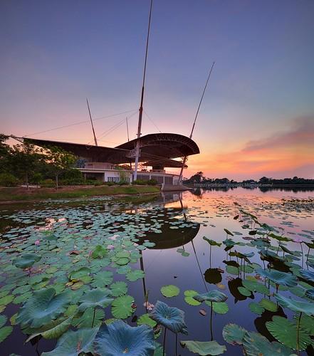 sunset waterlily lotus lakeside lakeview sunsetsunrise teratai cyberjaya lakegarden