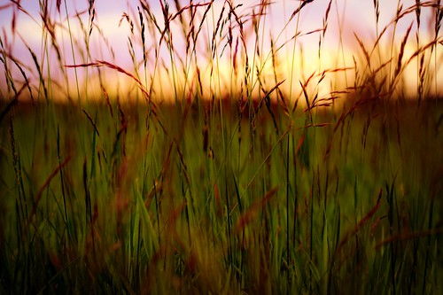 sunset sunlight macro grass canon landscape meadow lancashire fields ogden rochdale cannon600d