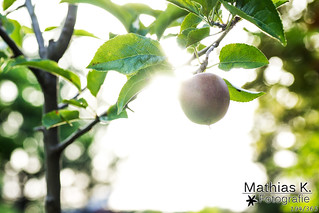 Apfel | Projekt 365 | Tag 194