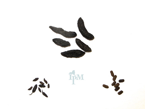 Photo shows three piles of brown to black feces on a white background. Notably, the top center droppings are large, while the bottom left and right groups of droppings are smaller.