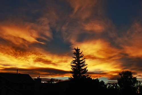 street blue autumn trees houses homes light sunset shadow red sky urban orange fall nature weather yellow night clouds canon fire gold evening twilight cloudy dusk branches silhouettes atmosphere neighborhood chinook drama davidsmith calgaryalbertacanada eos60d