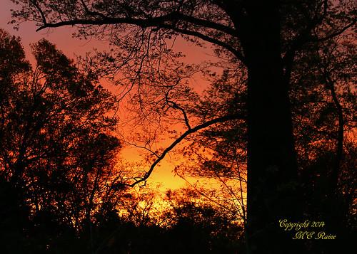 "trees nature silhouette sunrise dawn woods wildlife sanctuary naturepreserve ""golden ""magic dukefarms nj"" hour"" ""hillsborough"