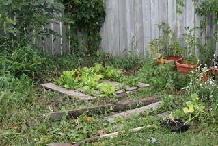 Garden | by Virtualdistortion