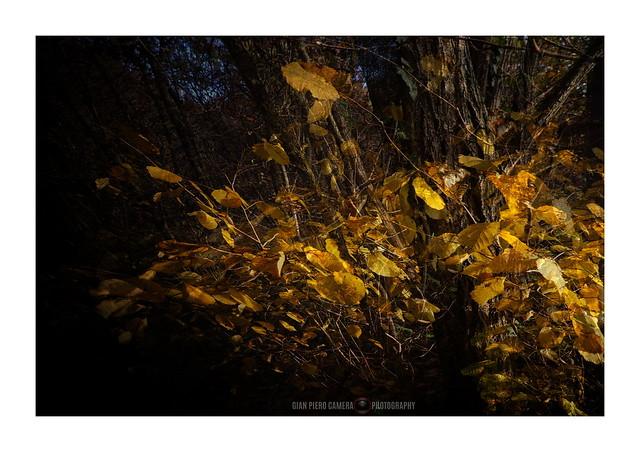 Di foglie, di vento