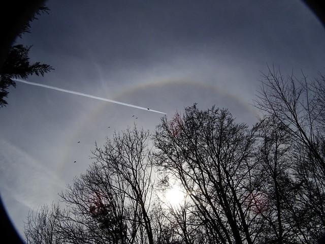 Cirrus Wolken mit Vogelflug