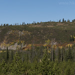 Fall colors along Boundary Creek Trail
