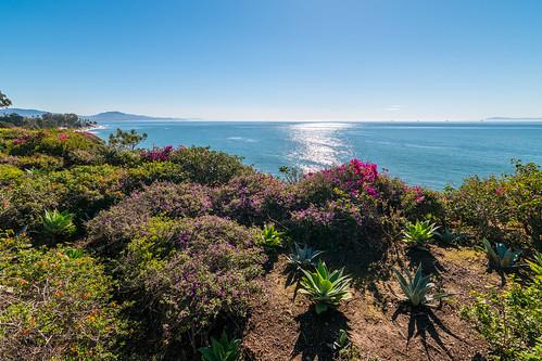 beach sunrise ocean california santa barbara flowers nikon tokina blue seascape garden coast sea water