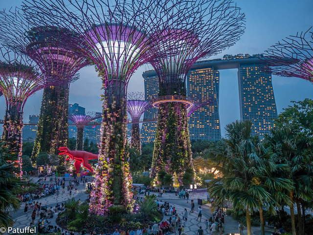 Singapore - Super Trees at night in Gardens by the Bay
