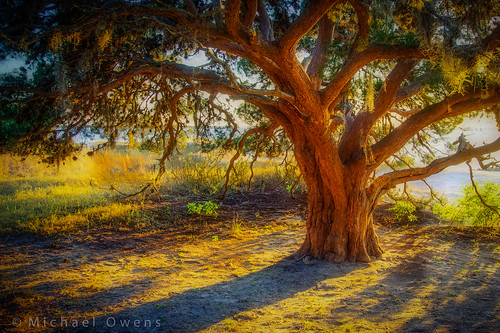 sunset tree florida cedar ameliaisland
