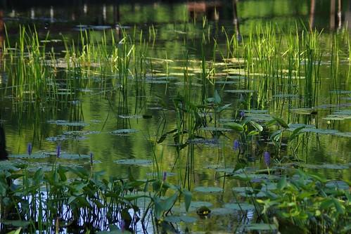 water reflections pond pentax connecticut newengland ct k3 2014 southfordfallsstatepark vbd smcpentaxda55300mmf458ed pentaxk3 summer2014