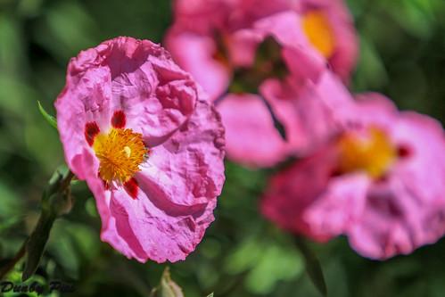 Flower in Garden at Tolay Lake Regional Park