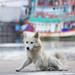 dog by Pimthida