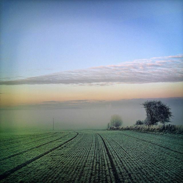 Frozen Field, Nr. Flixton, Yorkshire