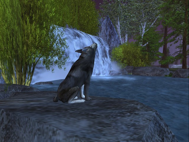 Peace Nation  - Gray Wolf Under A Purple Night Moon