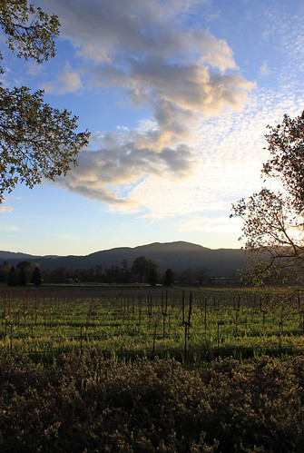 rutherford napavalley napa winecountry california february2017 winery vineyard mummnapa mummnapavalley sunset