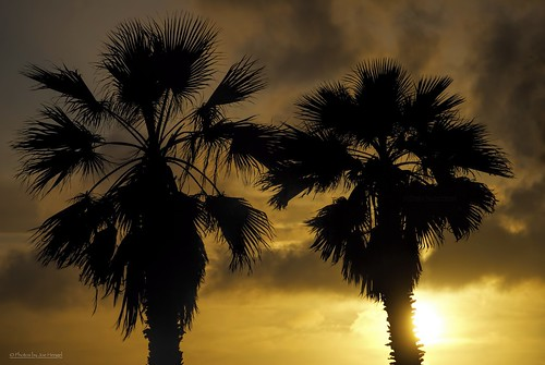 danapoint darkness evening eveninglight eveningskies palmtrees palmtree palm palmfronds socal southerncalifornia sunset seaside goldenstate golden goldenhour glow orangecounty oc outdoor tree trees theoc california ca clouds cloudsorangecounty cloudy silhouette silhouettes blockingmyview