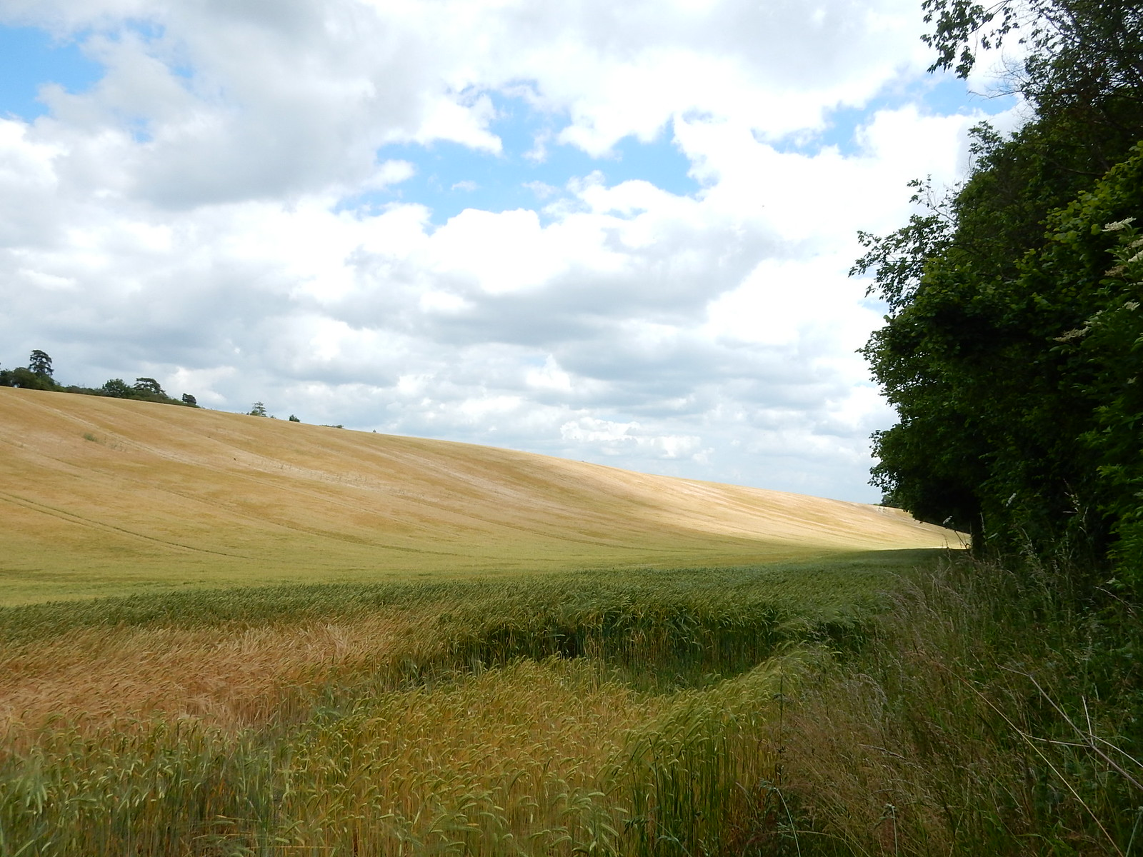 Wheatfield Hitchin Circular Shortcut 1