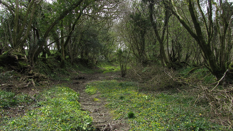 Path levels out near Burley Down