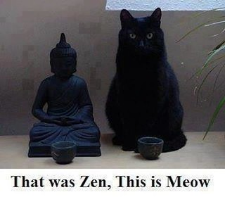 That Was Zen, This Is Meow....!