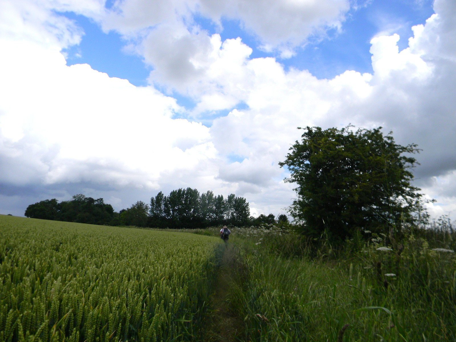Wheatfield Sawbridgeworth to Bishops Stortford