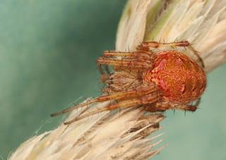 Spider   by IshranI