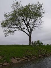 Musquodoboit River