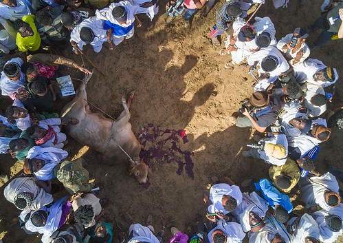 above aerial aerialview africa animal arab badhaasa boran borana borena bull celebration ceremony circle colourpicture cow crowd cruel culturalheritage cultures drone eastafrica ethdrone031721 ethiopia gaada gada gadasystem gadaa groupofpeople horizontal hornofafrica oromia oromiya oromo oromya outdoors sacrifice slaughter togetherness traditionalculture traditions tribalculture unesco unrecognizableperson yabello yabelo