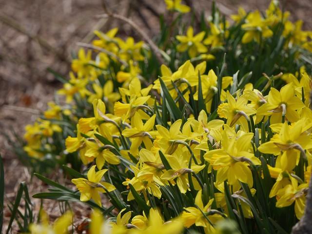 火, 2014-04-01 14:29 - Brooklyn Botanic Garden