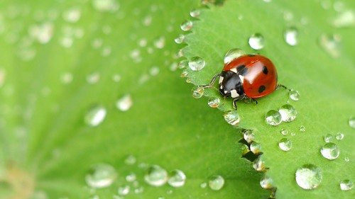 ladybug expedition   by ani!